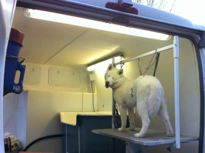 Waggies Mobile dog grooming Portsmouth Hampshire