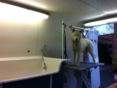 how Waggies dog groomers trim, clip, wash and groom your pet Portsmouth Hampshire